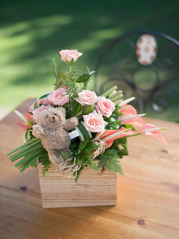 Salmon Pink Box – Teddy